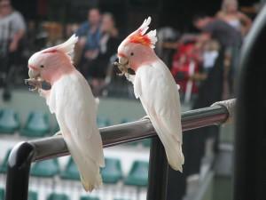 Australian Zoo, Sunshine Coast, animal show