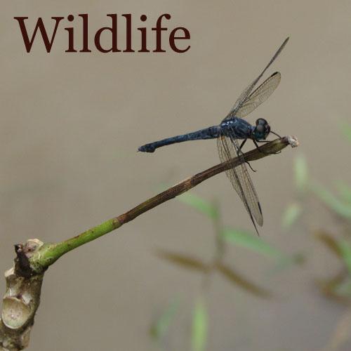 Top travel destination - wildlife