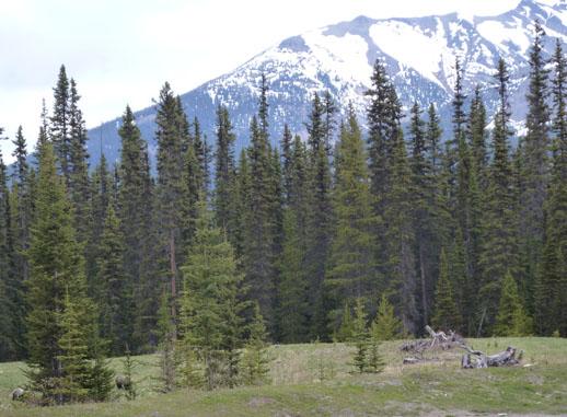 Bear spotting canada