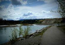 Take a Hike by the Yukon River - Whitehorse to Miles Canyon