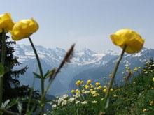 Things to Do in Lauterbrunnen, switzeland