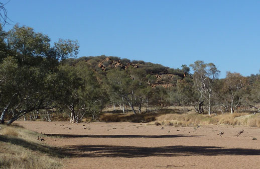 alice springs travel tips walalbies