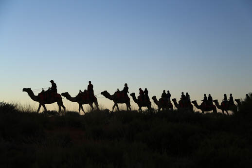 camel tour uluru