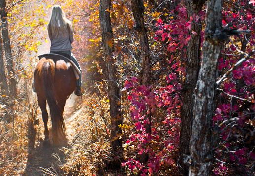 i-love-utah-view-horse