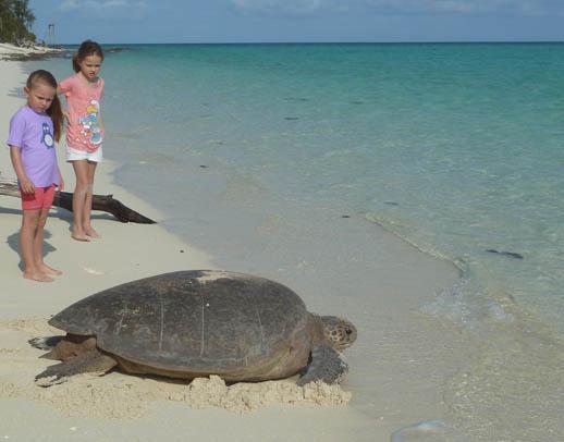turtle-nesting-heron-island-big