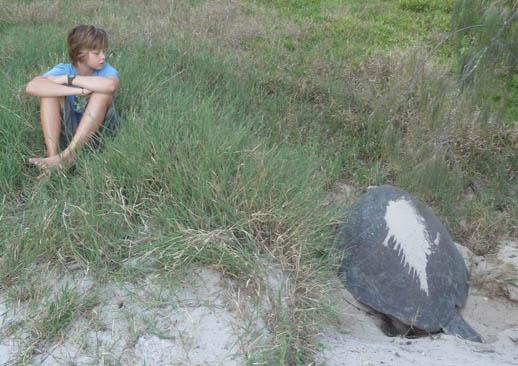 turtle-nesting-heron-island-max