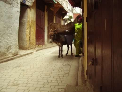 Traveling to the fez medina