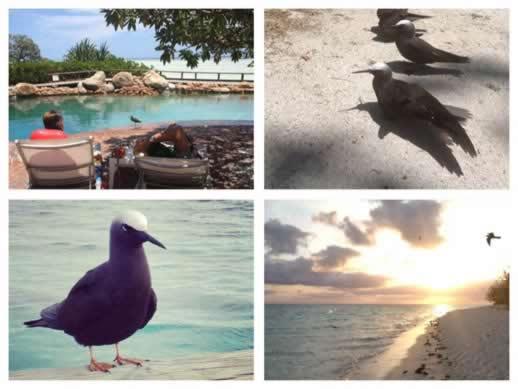 heron island birds