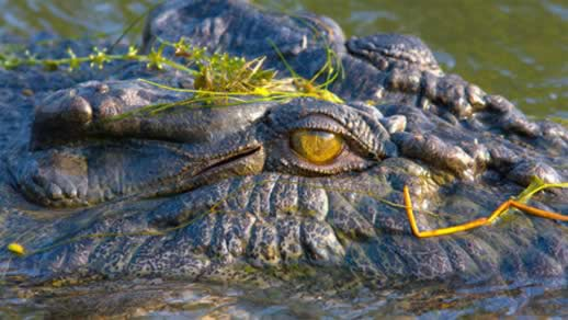 Salt water crocodile - Scarily beautiful in an ugly kind of way.