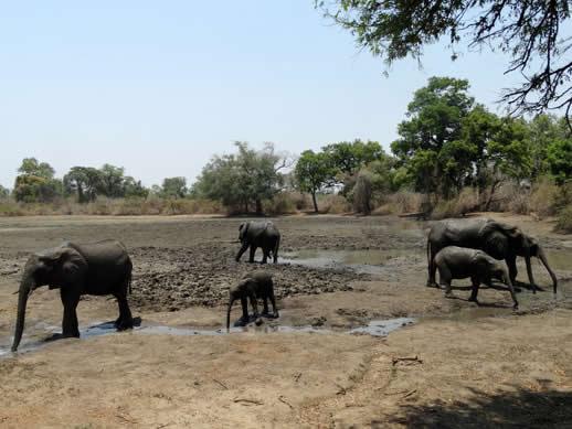 elephant family kanga camp small