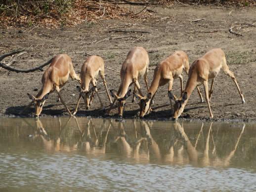 impala kanga camp review