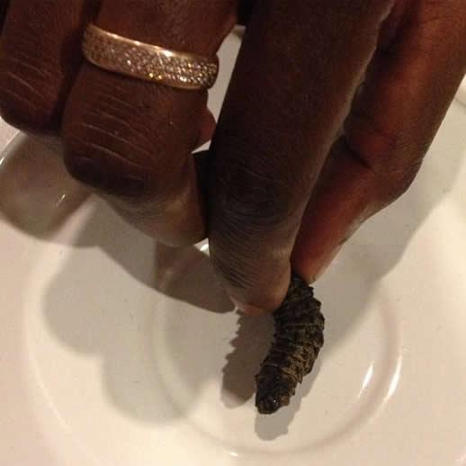 things to do in zimbabwe mopane worm