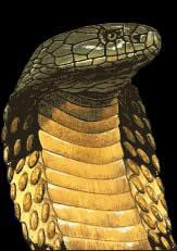 kundalini yoga snake