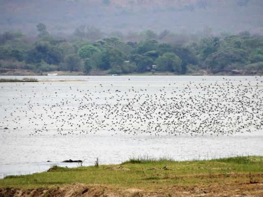 zambezi-birds