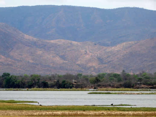 zambezi-stork