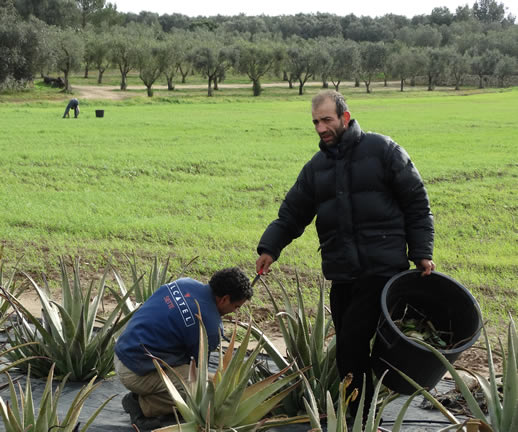 Nature, Wellbeing and Happiness in Salento farmers