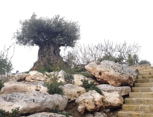 Nature, Wellbeing and Happiness in Salento tree