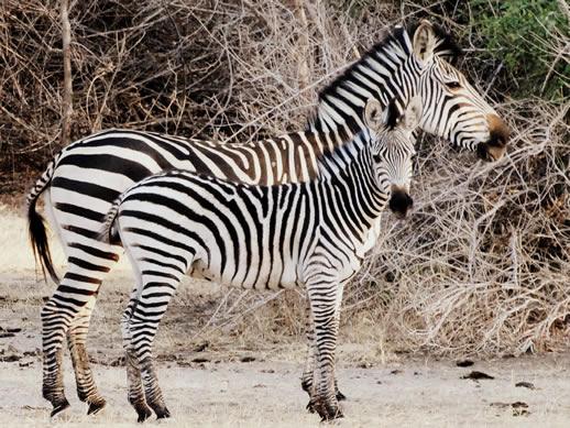 Dos and Don'ts for Safari