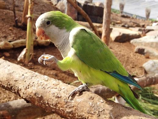 maleny botanic garden review green parrot