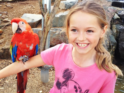 maleny botanic garden review kiara macaw - maleny-botanic-garden-review-kiara-macaw