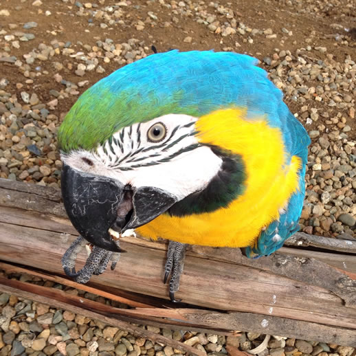 maleny botanic garden review macaw