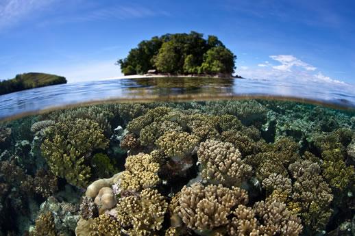 Island Travel Experience solomon