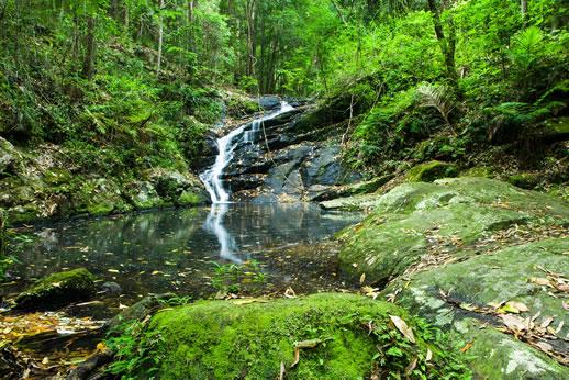 sunshine coast waterfalls kondalilla