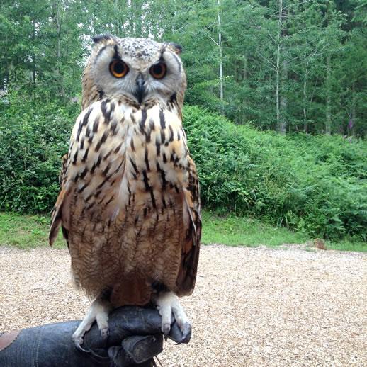centre parcs owl