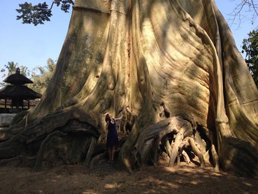giant tree and me again