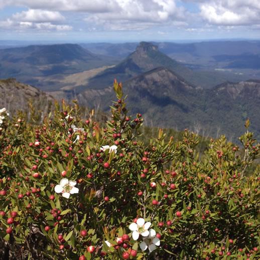 mount barney wildflowers 3