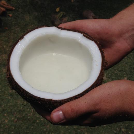 rumah desa coconut water
