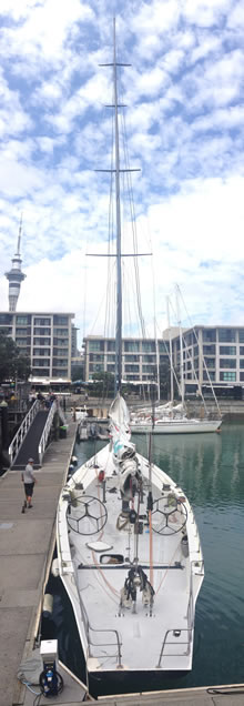 americas cup sailing auckland harbour