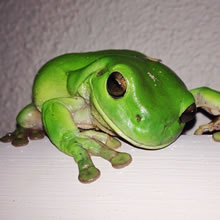 Funny Travel Story: Froggy Fun