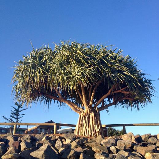 sunshine coast staycation rumba resort 10